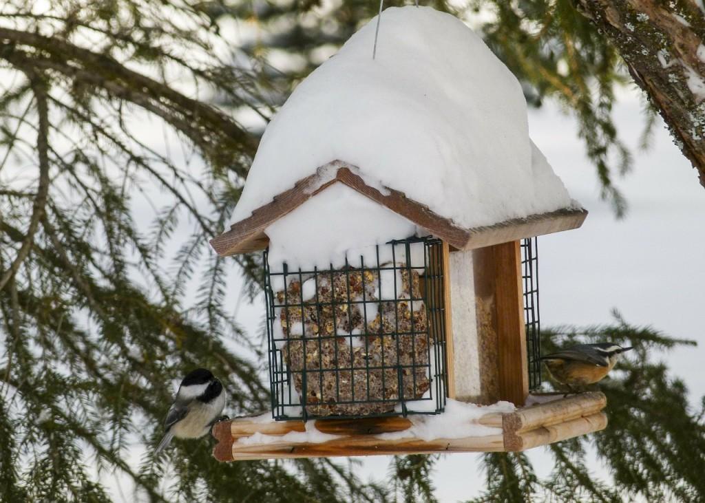 bird-house-283929_1280